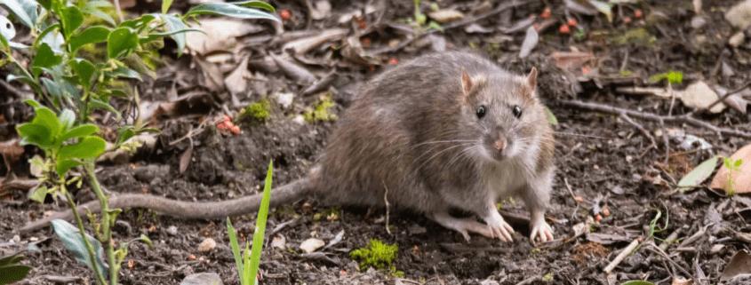 Hoekstra-Bedrijfshygiene-plaagdierenbestrijding