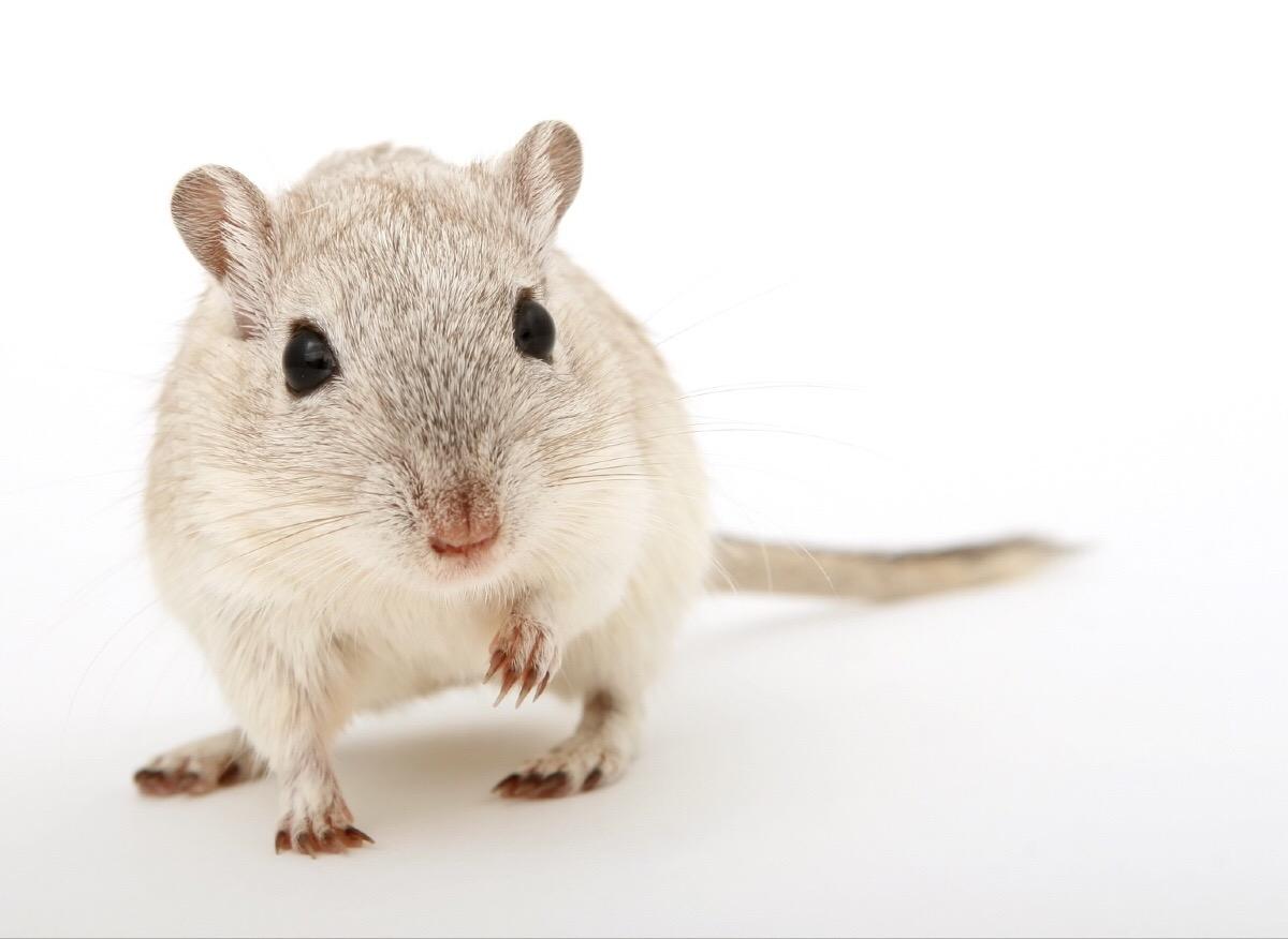 muizen bestrijden of ratten bestrijden - hoekstra bedrijfshygiëne, Gartenarbeit ideen